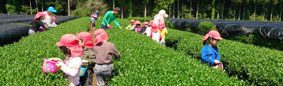 上質な茶葉は上質な土壌から